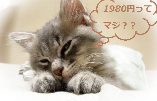 ワイモバイルのスマホプランは1年後に1980円ではなくなる!?2年目以降の月額料金はいくらになるのか!?